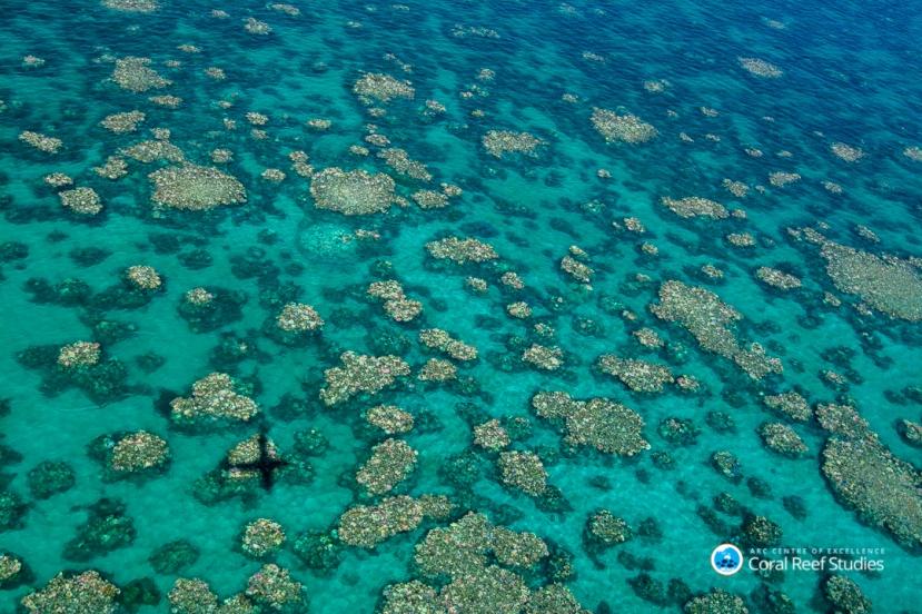 Cairns Townsville bleaching 2017 3 credit Ed Roberts
