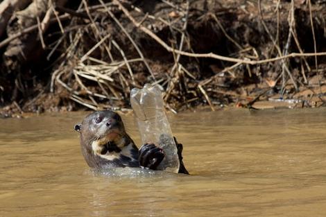 OtterWPlastic