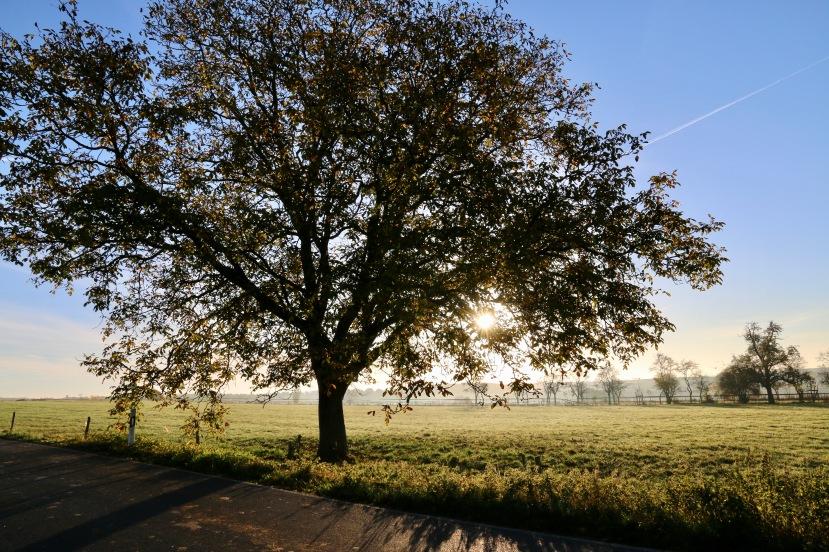 tree[2578]