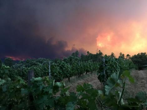 Smoke rises from a forest fire, seen from the village of Mourisco in central Portugal
