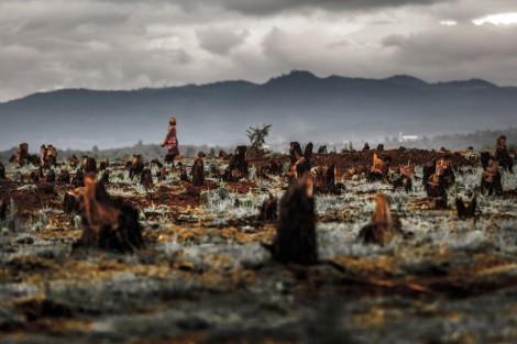 Deforestation Malaria
