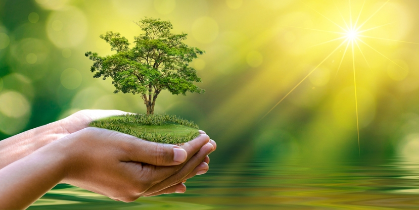 Environment Earth Day In The Hands Of Trees Growing Seedlings. B