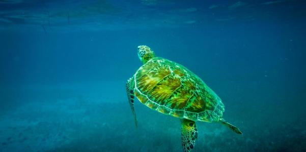 A loggerhead turtle, like those found in Abrolhos Marine National Park Image: Alamy