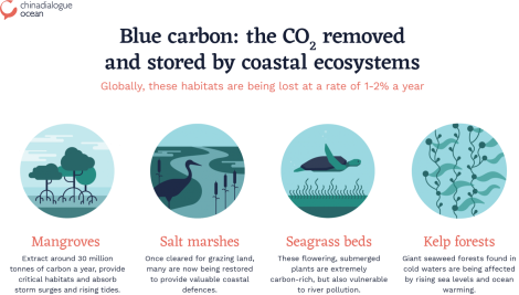 Blue-carbon-ecosystems-1408x800