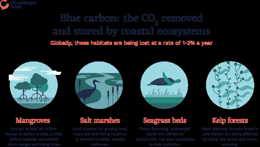 Blue-carbon-ecosystems-1408x800