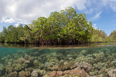 G4J73K-Mangroves-in-Indonesia-1440x960